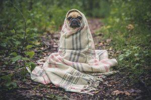 épilepsiechez le chien, comment traiter ce soucis de santé du chien